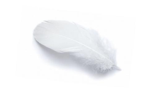 Een ganzenveer met daaraan een vlokje ganzendons